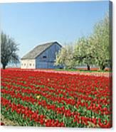 Tulip Field In Washington Stae Usa Canvas Print