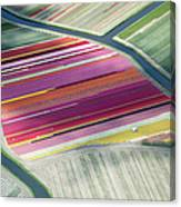 Tulip Fields, Aerial View, South Canvas Print
