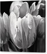 Tulip Flowers Black And White Canvas Print