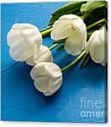 Tulip Flowers Over Blue Canvas Print