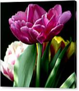 Tulip For Easter Canvas Print