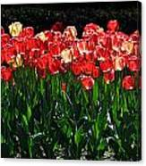 Tulip Forest Canvas Print