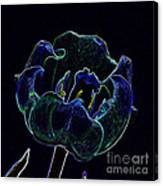 Tulip Glowing In The Moonlight Canvas Print