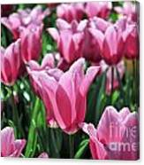 Tulip Heaven Canvas Print
