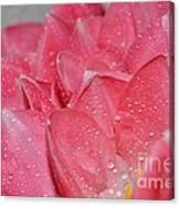 Tulip Lacery Canvas Print