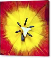 Tulip Nucleus Canvas Print