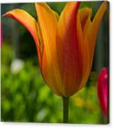 Tulip On The Green Background Canvas Print