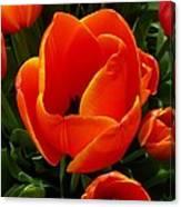 Tulip Orange Flower Canvas Print