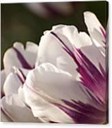 Tulip Pair Canvas Print