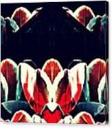 Tulip Panorama Canvas Print