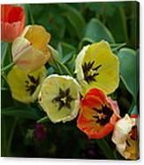 Tulip Parade Canvas Print