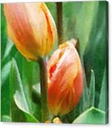 Tulip Quartet Canvas Print