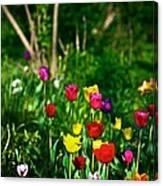 Tulip Rainbow Canvas Print