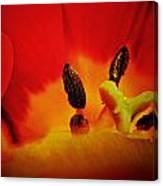 Tulip Sexuality Canvas Print