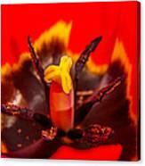 Tulip Stamp Canvas Print