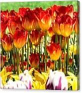 Tulip Stand In Mount Vernon Washington Canvas Print