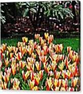 Tulip Stripe Garden Canvas Print