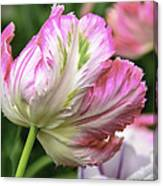 Tulip Time Pink And White Canvas Print
