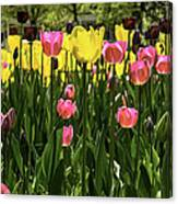 Tulip Time Pink Yellow Black Beauty Canvas Print