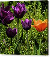 Tulip Time Purple And Orange Canvas Print