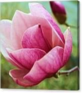Tulip Tree In Bloom Canvas Print