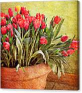 Tulip Tumble Canvas Print