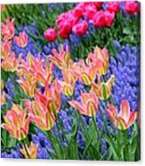 Tulips 2 Canvas Print