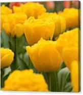 Tulips 29 Canvas Print