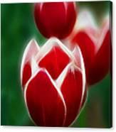 Tulips-6835-fractal Canvas Print