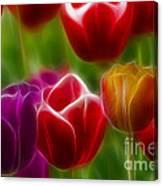 Tulips-7022-fractal Canvas Print