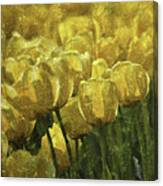 Tulips All Over Canvas Print
