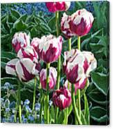 Tulips Among The Forget Me Nots Canvas Print