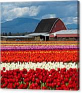Tulips And Barn Canvas Print