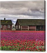 Tulips And Barns Canvas Print