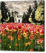 Tulips And Building Canvas Print