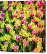 Tulips And Daffodils Canvas Print