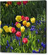 Tulips And Grape Hyacinths Canvas Print