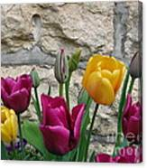 Tulips And Stone Canvas Print