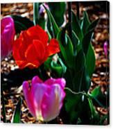 Tulips. Arlington Cemetery Canvas Print