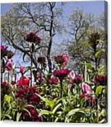 Tulips At Dallas Arboretum V35 Canvas Print