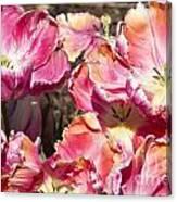 Tulips At Dallas Arboretum V58 Canvas Print