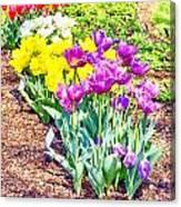 Tulips At Dallas Arboretum V65 Canvas Print