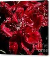 Tulips At Dallas Arboretum V74 Canvas Print
