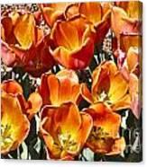 Tulips At Dallas Arboretum V80 Canvas Print