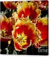 Tulips At Dallas Arboretum V84 Canvas Print