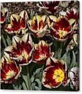 Tulips At Dallas Arboretum V93 Canvas Print