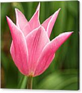 Tulips At Thanksgiving Point - 17 Canvas Print