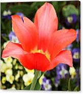 Tulips At Thanksgiving Point - 27 Canvas Print