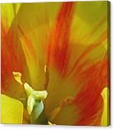 Tulips - Cheerful Energy 06 Canvas Print
