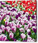 Tulips Field Canvas Print